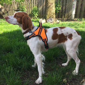 Dual adjustable Pet HARNESS